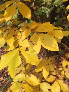 Fall at Old Oaks